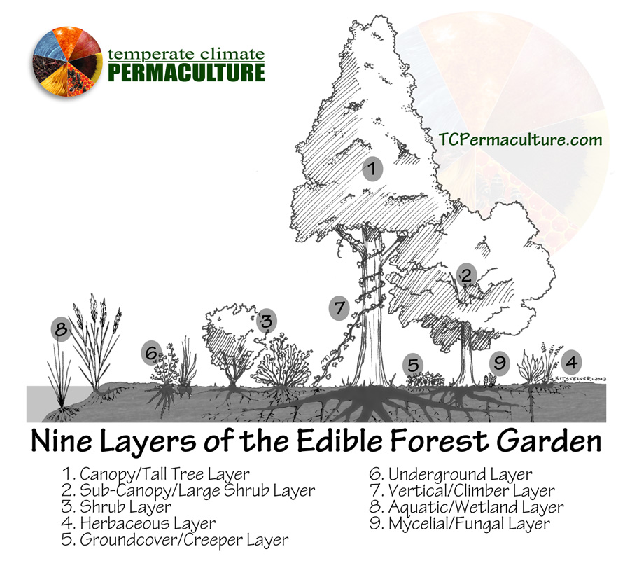 Forest_Garden_TCPermaculture